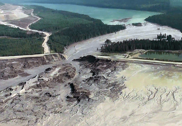 Failure of the Mount Polley tailings basin in British Columbia destroyed everything in its path,  also placing populations of Chinook salmon and rainbow trout at risk. (Source: Cariboo Regional District)