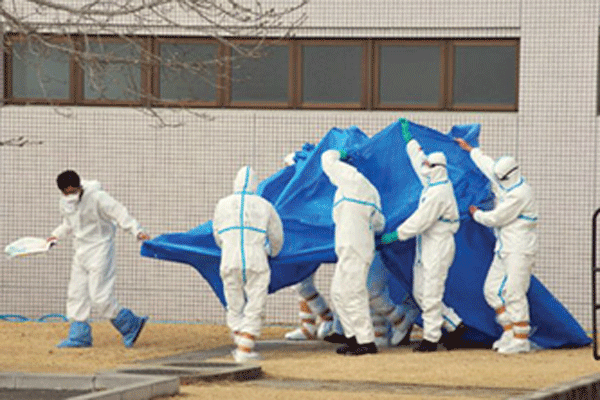 Japan Self-Defense Force officers in radiation protection suits hold a blue sheet over patients who were exposed to high levels of radiation during evacuation from Fukushima-Daiichi. A recent criminal indictment alleges that 44 hospitalized elderly people died during their evacuation. Photo: Getty Images.